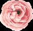 flower-icon